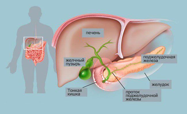 Полипы в печени лечение